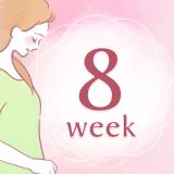 妊娠8週 アイコン
