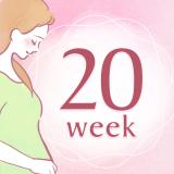 妊娠20週 アイコン