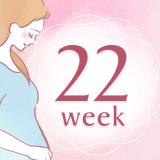 妊娠22週 アイコン