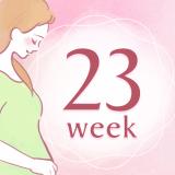 妊娠23週 アイコン