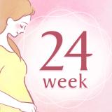 妊娠24週 アイコン