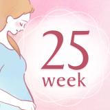 妊娠25週 アイコン