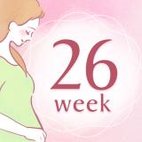 妊娠26週 アイコン