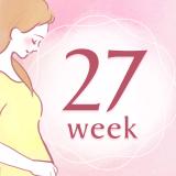 妊娠27週 アイコン