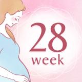 妊娠28週 アイコン