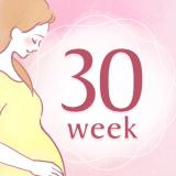 妊娠30週 アイコン