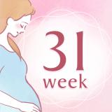 妊娠31週 アイコン