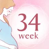 妊娠34週 アイコン