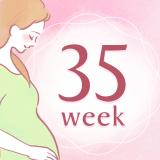 妊娠35週 アイコン