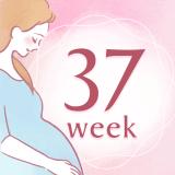妊娠37週 アイコン