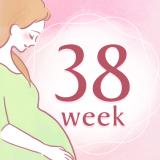 妊娠38週 アイコン
