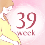 妊娠39週 アイコン