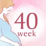 妊娠40週 アイコン