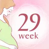 妊娠29週 アイコン
