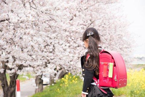 入学式 女の子 ランドセル 春
