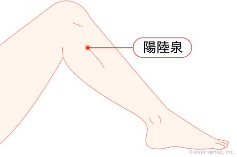 ツボ 陽陸泉