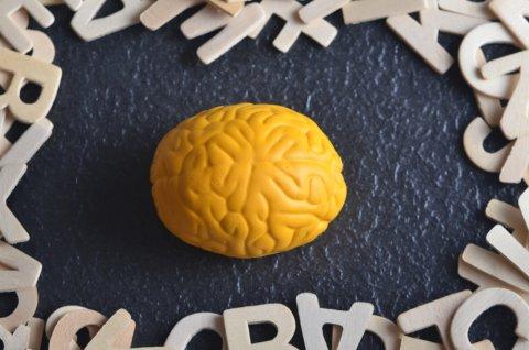 脳 考える