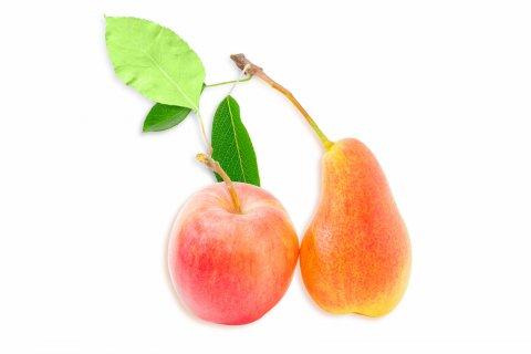 皮下脂肪と内臓脂肪 りんごと洋ナシ