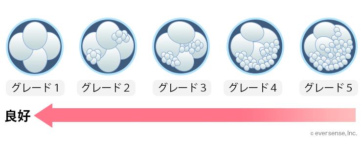 出産日 凍結胚移植