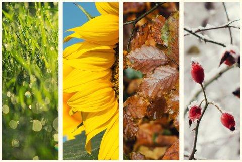 四季 季節 シーズン