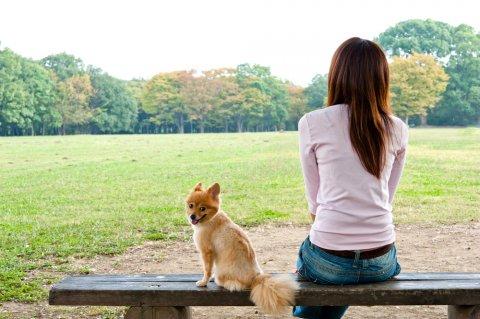 女性 日本人 犬 公園 散歩