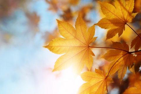 秋 空 紅葉 楓 晴れ