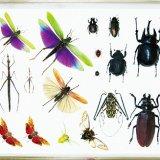 要出典 特別展 昆虫