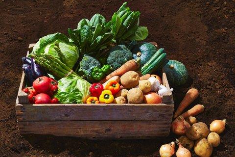 記事広告 生活クラブ 野菜