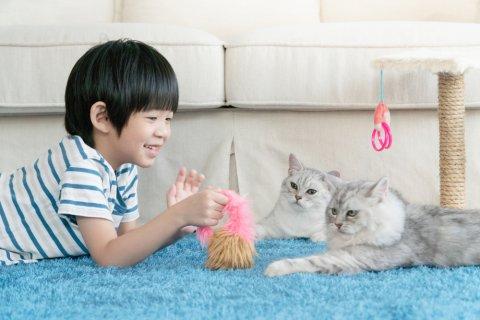日本人 カーペット ラグ 子供 猫