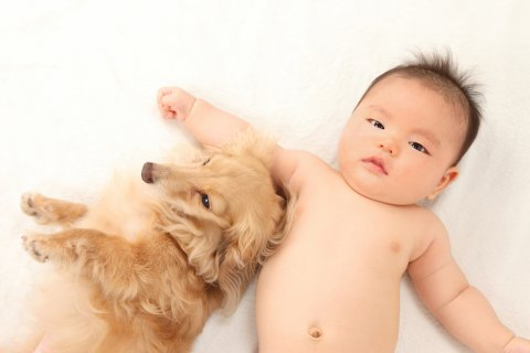 赤ちゃん 新生児 犬 日本人