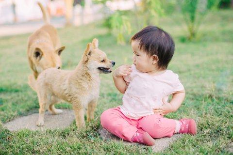 犬 赤ちゃん 日本人
