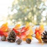 秋 まつぼっくり インテリア